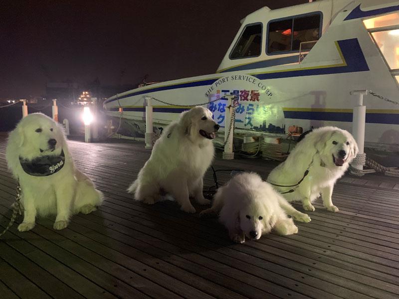 横浜ドッグウィークでクルージング