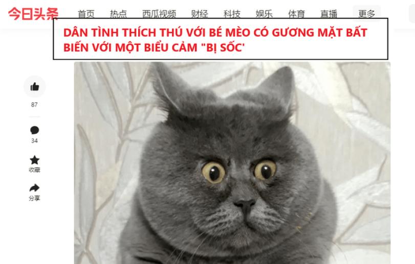 chú mèo nổi tiếng trên mạng