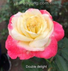 Hong ngoai_24