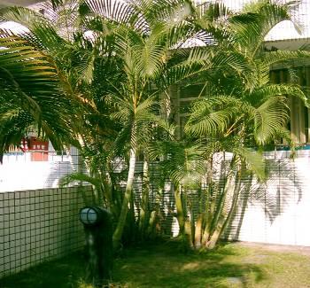 校園被子植物-單子葉植物 | 康老師的自然教室