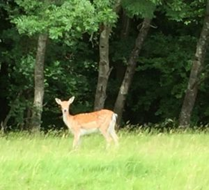 Deer are roaming free in the park and you will have opportunity to admire them