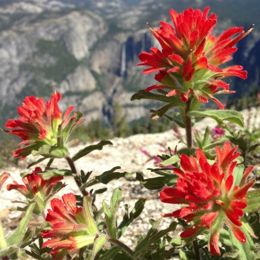 Yosemite_Falls_Paintbrush_DeGrazio