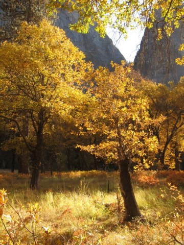 Oaks_Cathedrals_Yosemite_DeGrazio