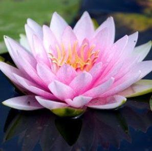 present-movement-yoga-pilates-en-mindfulness