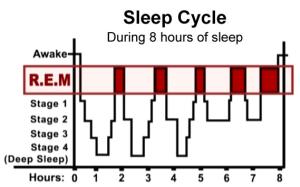 Sleep Cycle  Sleep Diagram  How Much Sleep Do I Need