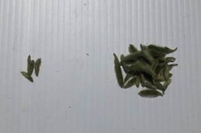 Comparison of treated and untreated pods