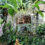 Coryanthes macrantha 'Jardin botanique de Montréal' AM/AOS