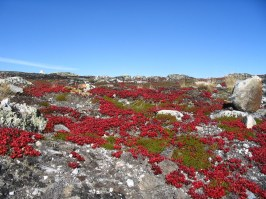 Spring on the Tundra, Jericho Diamond Mine