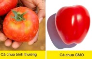 Hướng dẫn nhận biết thực phẩm biến đổi gen