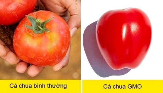 cach phan biet thuc pham bien doi gen Hướng dẫn nhận biết thực phẩm biến đổi gen cach phan biet thuc pham bien doi gen gmo bang mat thuong