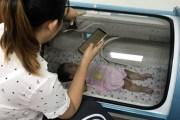 Dùng lồng oxy cao áp 'cứu não' bé gái 9 tháng tuổi bị điện giật do nắm vào bóng đèn trên bàn thờ ông địa
