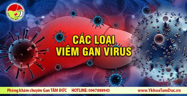 viem gan virus co may loai cac loai viem gan virus