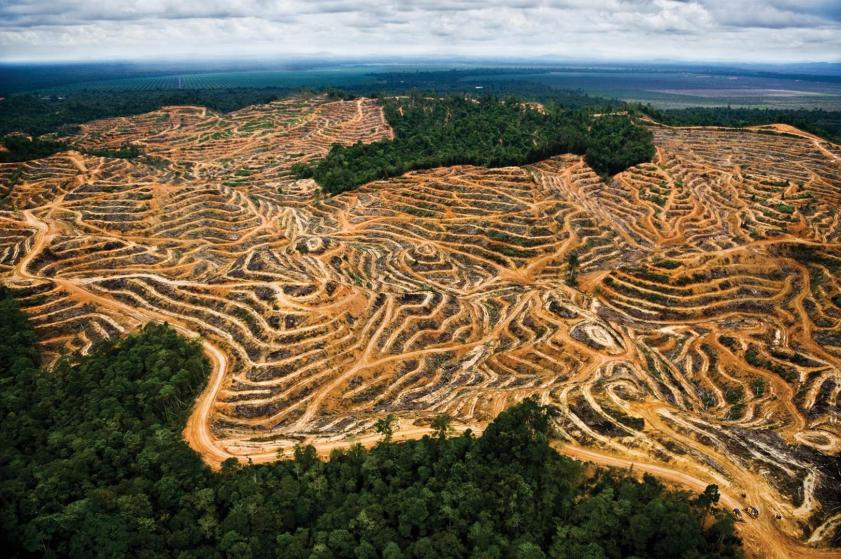 Indonesian clear cut