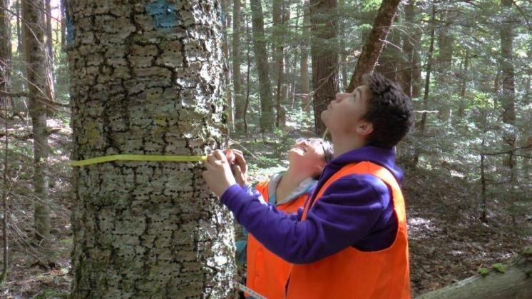 old growth forest survey