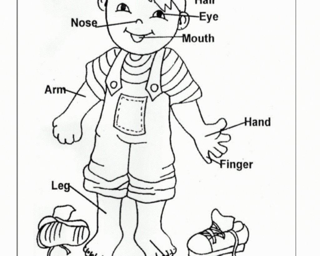 Worksheet For Parts Of The Body For Kindergarten Letter