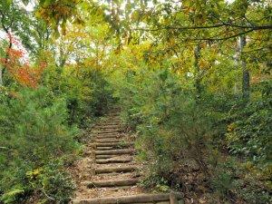 蛇谷ヶ峰 階段