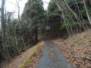 竜王山までの林道
