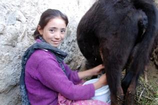 牛の乳搾りをするマンギュの女の子