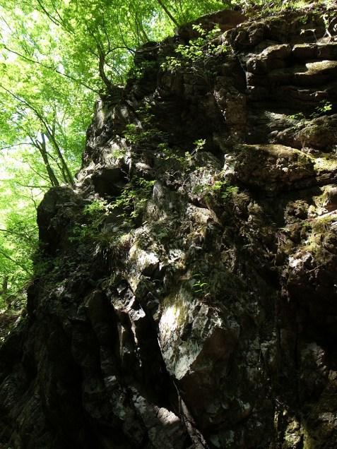 岩石園にて