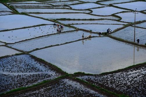 パロ郊外の水田