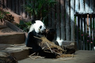 チェンマイ動物園にて