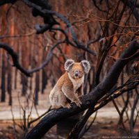 The Australian bushfires aren't headline news anymore – but we're only halfway t...
