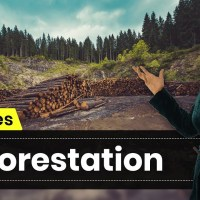 Deforestation and Its Causes | Conservation of Plants and Animals  | Science | Class 8 | In Hindi