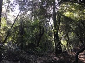 Sturtevant Trail