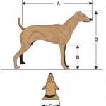Правилно измерване големината на куче при избор на Къща за куче