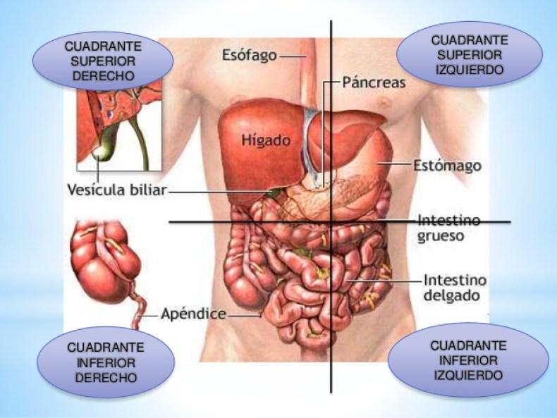 cuadrantes y cavidades abdominales