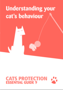 cats-behaviour-211x300 Theme Builder Layout