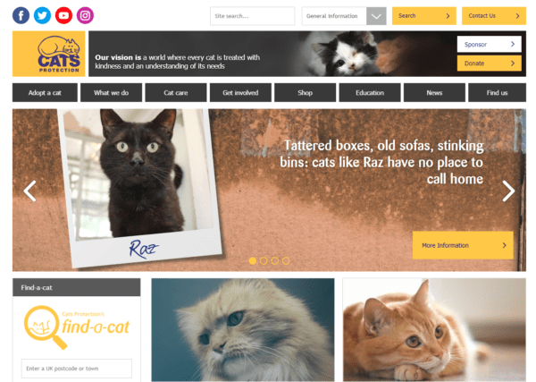 cats-protection-homepage-e1536243627672-600x427 Theme Builder Layout