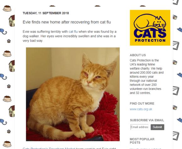 meow-blog-e1536660837777 Jono reviews: Cats Protection