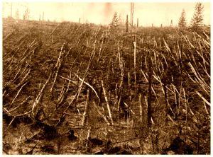 árboles caídos 2