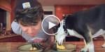 Dog VS. Human: Eating Contest