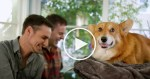 Weird Things Couples Do with Their Dogs. Can You Relate?