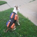 CANINE WEIGHT SET® / Weighted Animal Vest®