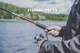 facts about fishing