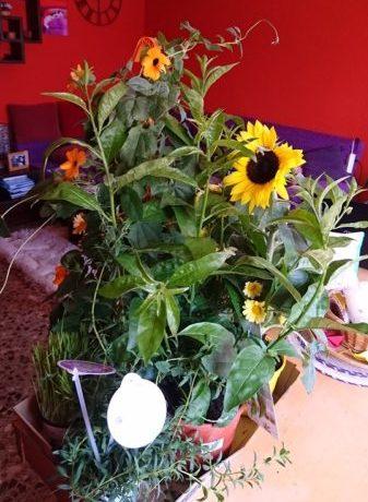 flores y plantas Verdecora