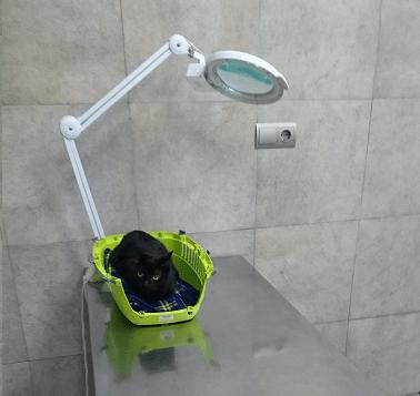 gato transportín