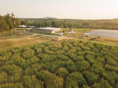 The 2019 Corn Maze