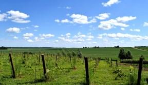 Red Barn Farm, Northfield, MN