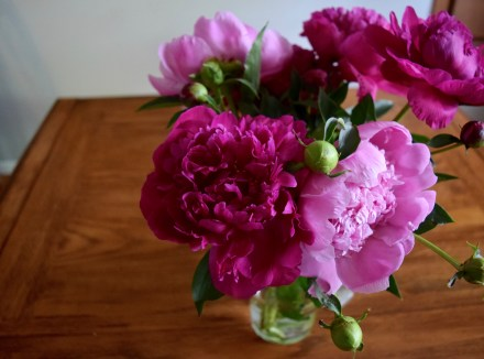 Peonies from the Minneapolis Farmer's Market