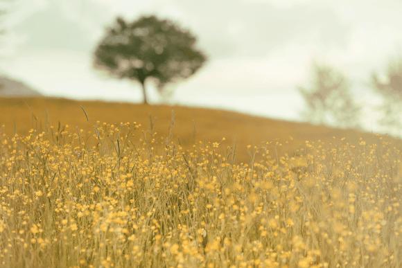 blumenwiese_unsplash-silvestrimatteo