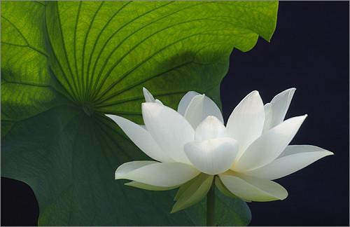 Paz interior Te relajas, apaciguas la mente y disfrutas de paz interior