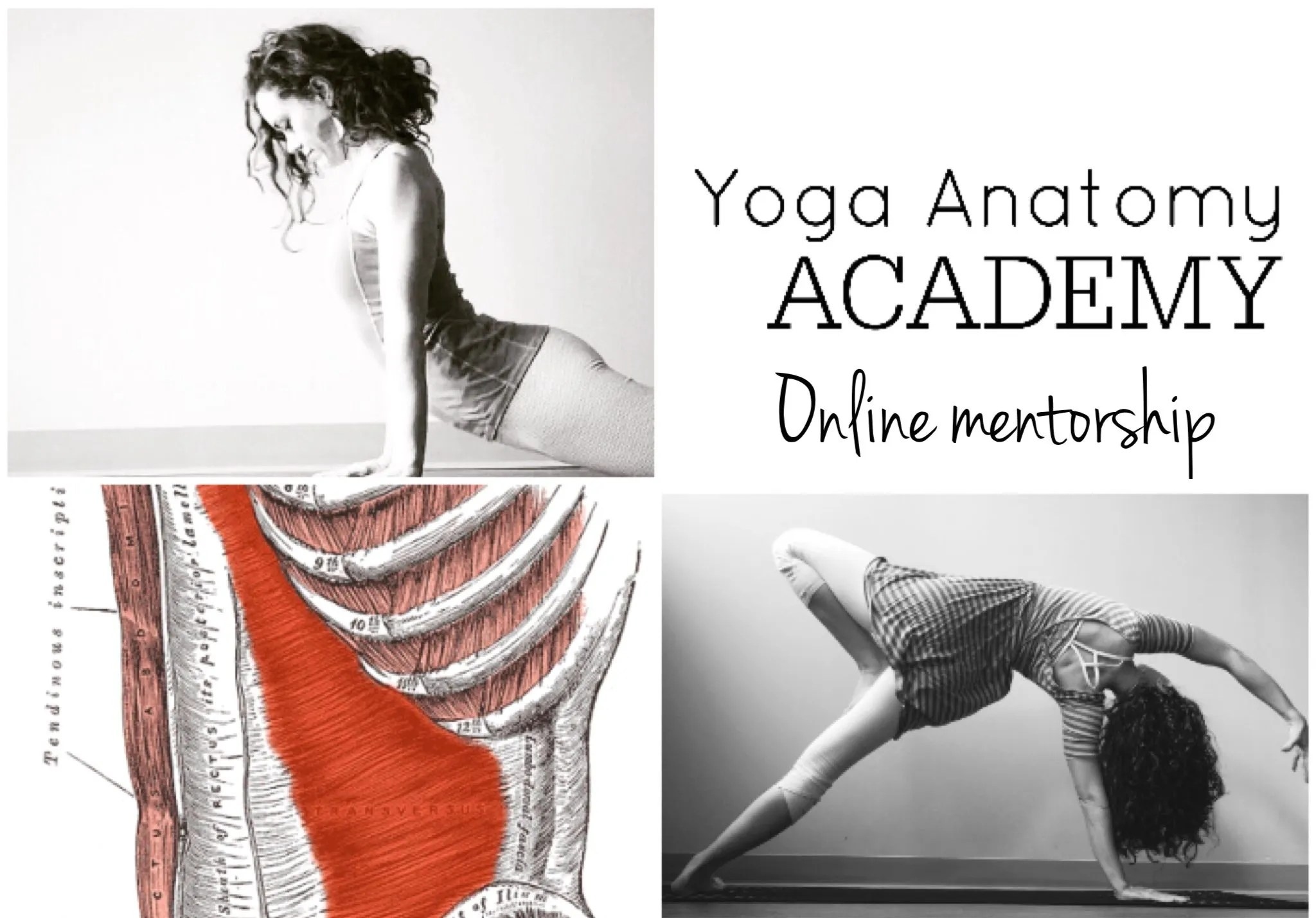 About - YOGA ANATOMY ACADEMY