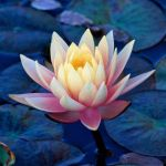 yogafleurdelotus_compassion