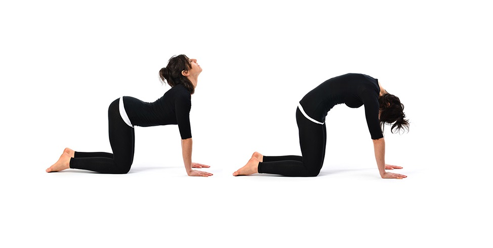 Cat Cow Pose: Benefits, Steps & Precautions – YogaHolism