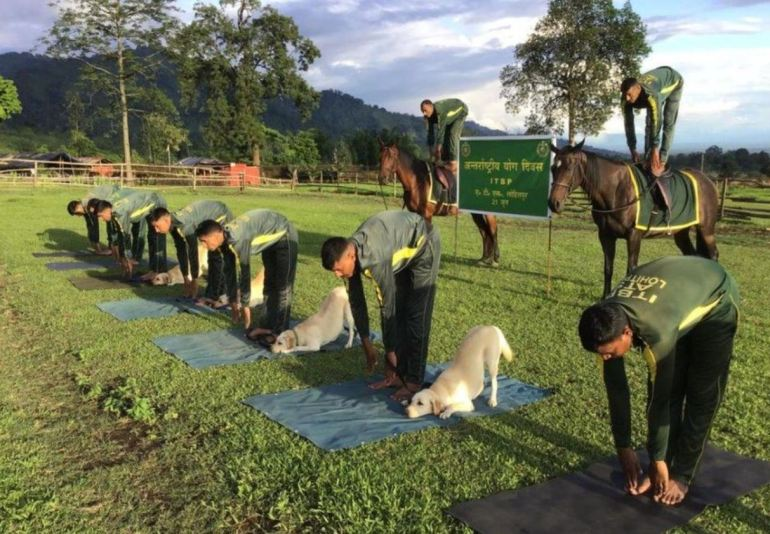 Animal Yoga - Yoga on Horse