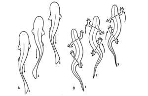 Spine Evolution